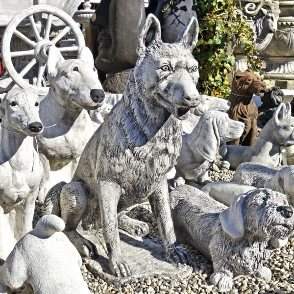Belgischer Schäferhund Mechels