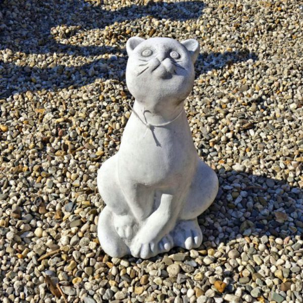 Kat zittend schuin