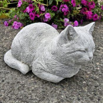 Kat liggend